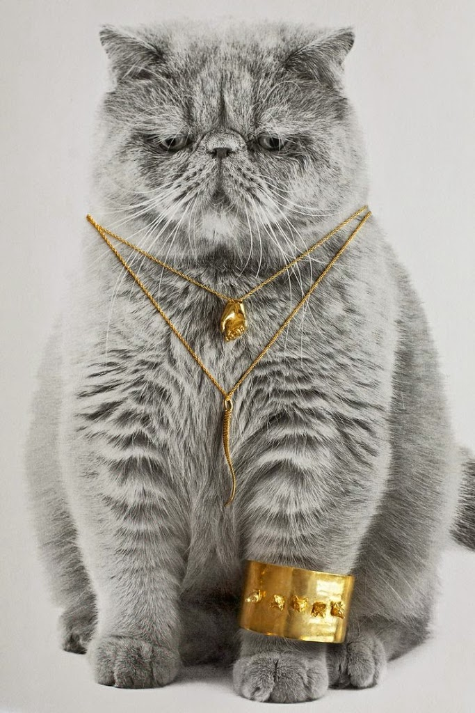 cat modelling jewellery