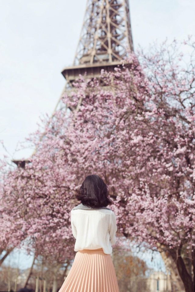 Eiffel tower, cherry blossoms