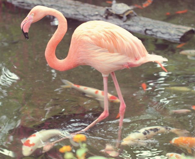 flamingo7