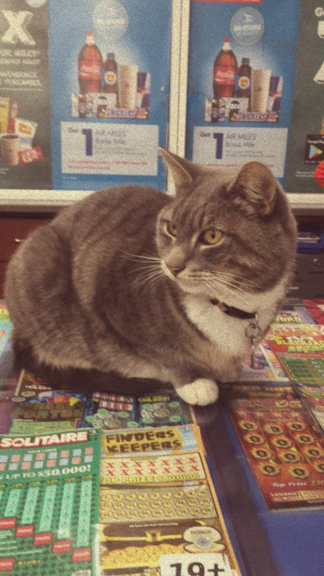 Convenience store cat