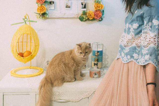 Pier 1 Imports, DIY Floral Frame, Cat Dishes