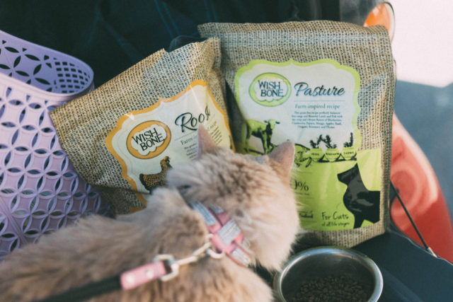 Wishbone Pet Foods, Amazon, Gluten Free, Cat food, Small Batch, Grain-Free, Free From Fillers