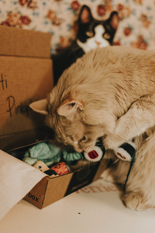 MeowBox, Unboxing, review, March 2018, Cat subscription Box., monthly subscription box for cats, Pinky the Cat, Cats on Instagram