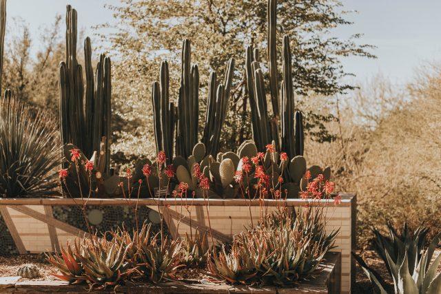 Arizona Biltmore, A Waldorf Astoria Restore in Phoenix, Vintage resorts in Phoenix, Margot Wrap Dress, Sky-Pineapples, silk dress,