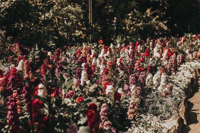 Butchart Gardens, Rose Garden, Summer 2019, Afternoon Tea, summer, Victoria, Unique Vintage, Unique Vintage 1960s Style Pink Floral & Large Ivory Bow Tie Marin Flare Dress, 1960s fashion