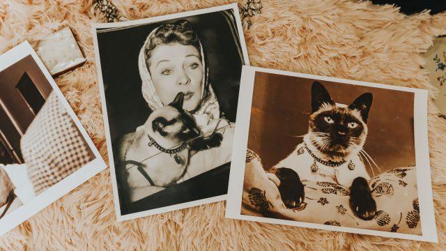 old hollywood cat ladies, vintage cat ladies, famous old hollywood cats, famous cats,